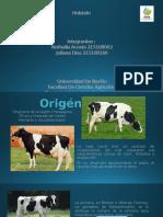 Holstein Presentación