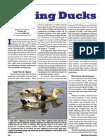 Raising Ducks Holder Read