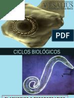 Ciclos Biologicos