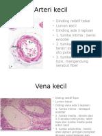 ppt histologi arter kecil-vena kecil
