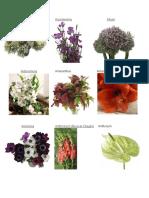 30 Tipos de Flores