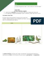 Resumen Tema de Les Plantes
