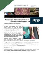 Fluidoterapia, Hidratación y Nutrición en Reptiles, Vía Oral
