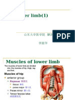The lower limb.ppt