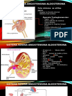 Sistema Renina Angiotensina Aldosterona.pptx Paola