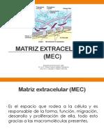 4- Matriz Extracelular T Conectivo