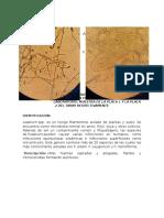 IDENTIFICACION DE MOHOS Y LEVADURAS EN CEREALES ANDINOS