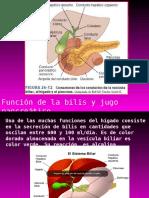 Fisio Bilis-Pancreas