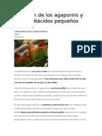 Nutrición de Los Agapornis y Otros Psitácidos Pequeños