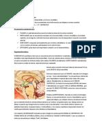 DIENCEFALO (2)