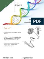 Extracción de ADN-Seminario_SRC.pdf