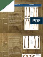 Manual de Lateralización de Los Huesos