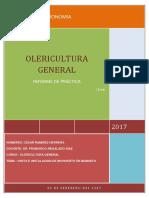 Olericultura - Practica