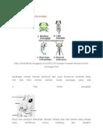 Tipe Mulut Serangga Pak Edi Entimologi