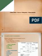 Clase 13. Generos Chlamydia y Chlamydophila 2007.