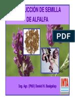 produccion de semilla de alfalfa
