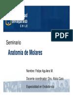 PptAnatomiaDeMolares1