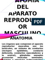 Anatomía Ap. Reproductor.pptx