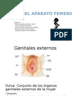 Anatomia Del Sistema Femenino