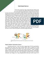 Embriologi Pankreas
