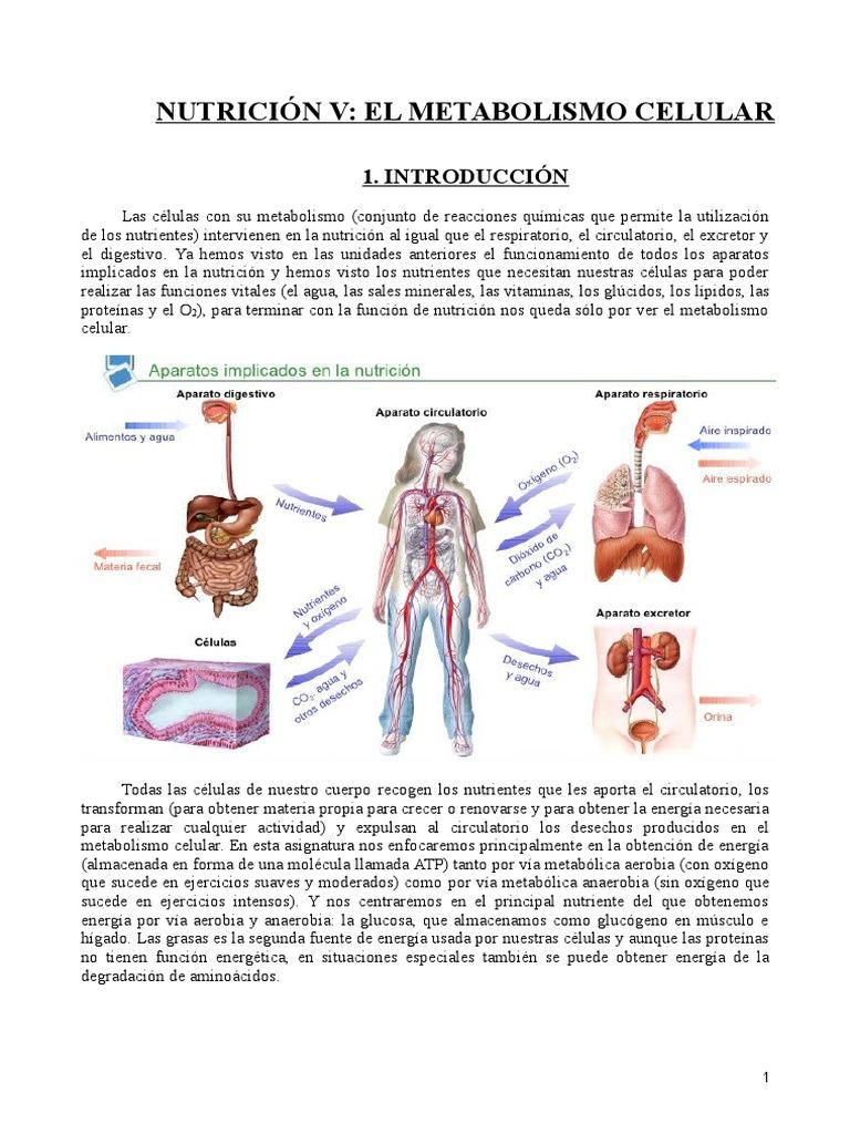 La muerte de metabolismo insulina y cómo evitarlo