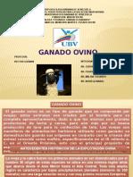 Expo Ganado Ovino