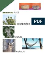 Flora Fauna Yucatan