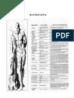 Muscule Chart