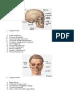 tulang wajah
