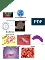 Virus Y BACTERIAS Imgen1