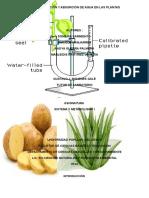 Transpiracion y Absorcion de Agua en Las Plantas (Autoguardado) 2333