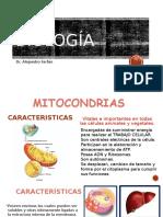 Clase 5 Estructura y Fisiologia de Organelos Transductores de Energía Mitocondria, Plastos (1)