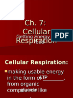 Cellular Respiration Anaerobic and Aerobic