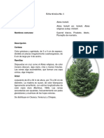 F.T. 6 Abies Hickelii