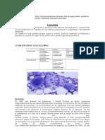 leucemia enfoque primario