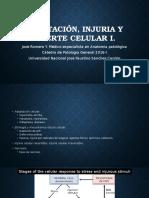 2. Adaptación, Injuria y Muerte Celular i (2)