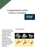 Comparacion Entre Mono y Hombre