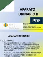 APARATO URINARIO 2