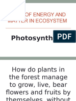 Flow of Energy and Matter in Ecosystem