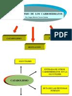2. Metabolismo de Carbohidr