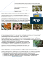 Clases de Flora de Venezuela