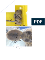 AnatomiaFetal rotulated