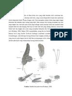 Bulu (Feathers)