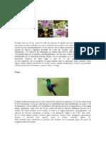 Fauna Del Ecuador