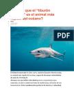 Tiburón Marrajo (Curiosidades)