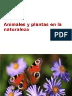 Animales y Plantas en La Naturaleza
