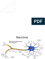 Partes Neurona