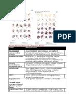 Cont_Manifestations of Severe Falciparum Malaria