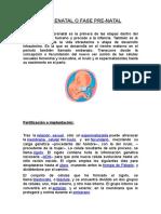 La Etapa Prenatal o Fase Pre... Psicologia