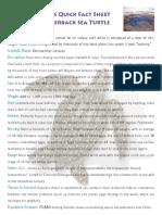 Penyu Belimbing(Leatherback)